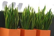 plantas minimalistas