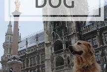 Travel with pets / Pets deserve a holiday too! Tips for travelling with dogs and other family pets