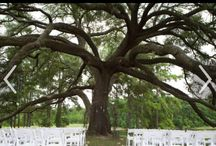 Our Wedding / April 14, 2016, we are getting married at Pine Lake Ranch under this beautiful tree!  I love rustic but also want to incorporate the fireman theme.  I'm not sure how I can put the 2 together and make it pretty, so I need your creative minds to help❤️ / by Heather Boudreaux