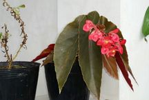 Flowers in Samal island