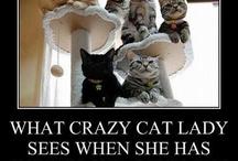 Cat Crazy / by Kathleen Sheldon