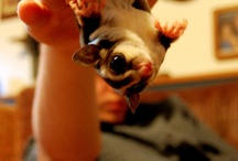 Awesome exotic pets