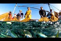 """Рыба оптом от производителей / Альбом рыбной продукции компании """"ГрандФорд"""""""