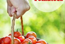 Tomat / Tips for Growing Tomatoes