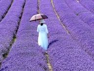 Purple Haze / by Maggie Franklin