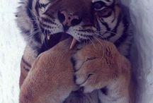 Tigers  / by Tamara Pensa