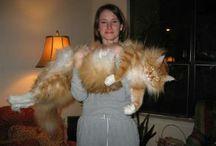 Kitties and Doggies~