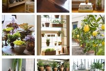 indoor jungel start now / plants, installations, crative gardening