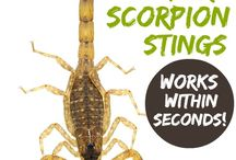 THE BEST NATURAL REMEDY FOR SCORPION STINGS / Works within minutes.