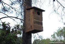 Cajas nido / Aves insectívoras, rapaces y murciélagos