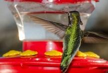 Hummingbirds / Photographer Michael Moriarty http:///www.facebook.com/michaelmoriartyphotography