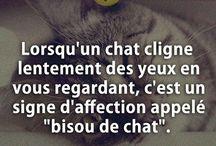 citation chat