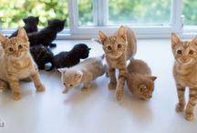 Kotki, kociaki wąsy i inne