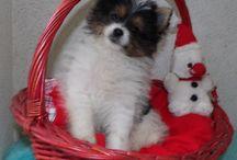 Unser allerbeste Freund! / Unser Familienhund!