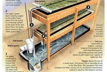 Cultivos Aquaponicos
