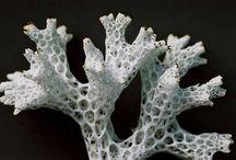 Lichen / by nervous jessica