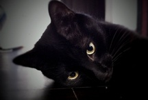Cat life / Kyz & Denzel, B&W cats.