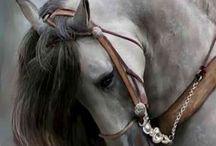 Hayvansal güzellik