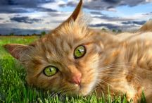 Kitties / by Joanne Ehling Harper