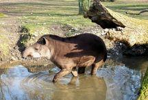 Zoo d'Amiens / L'actualité en images sur le Parc Zoologique d'Amiens Métropole (France)