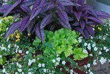 Garden plants & Trees - Types