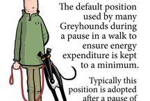 Greyhound Cartoons