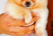 love pet