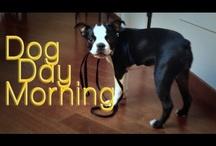 Dog Day Morning - NiNa The Dog Series
