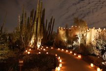 Las Noches de las Luminarias / The Desert Botanical Garden's annual holiday event. / by Desert Botanical Garden