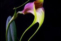 Flowery Pleasures