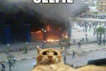 Vtipné Obrázky Zvierat