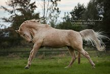 Horses / Horses-pictures and information