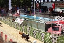 Robinson's Pig Racing