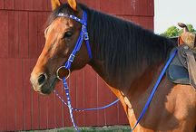 Hack tack / Outriding horse tack