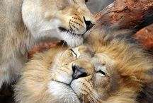 Lion King and Family