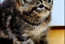 Vappu ja Pimiä kissanpennut / Kissanpentujen Vapun ja PImiän kuvia ja videoita. Videitota löytyy myös Youtubesta:https://www.youtube.com/playlist?list=PL06gWa01j9lfg0xEYIV8Y6Oo68j79iGvc ja kuvia löytyy flickr-palvelusta: https://www.flickr.com/photos/peekoon/