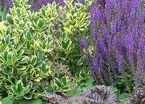 pflegearme Gärten
