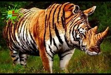 Animales hibridos