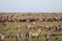 East Africa tours
