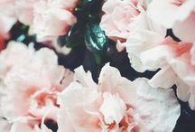Flower pwr