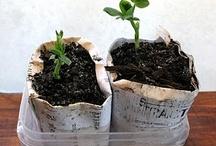 Plant Whisperer-get yo garden on