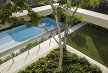 Fremantle Landscape | TDL / A modern clean design, that incorporated an old per-existing pool to allow for a new sleek infinity pool. As well as taking advantage of a 3 story void to plant a mature leopard  tree to create  interest in the garden on all levels