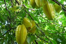 Tropical Fruit Trees / Everything Tropical Fruit Tree