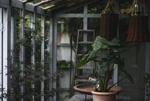 inspo | Garden and flowers