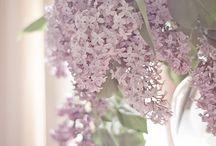 Flowers / by Amanda Corey