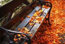 Autumn Spledor