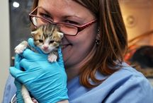 Dr. In Action / Veterinary Care