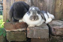 Wackelnasen / Muffin & Schlappi meine zwei Hasis, die mir das Herz gestohlen haben ♥️