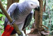Birds / Cute birds that everyone wants as a pet..Sp cute and lovely
