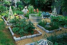 elevated herb and veg garden